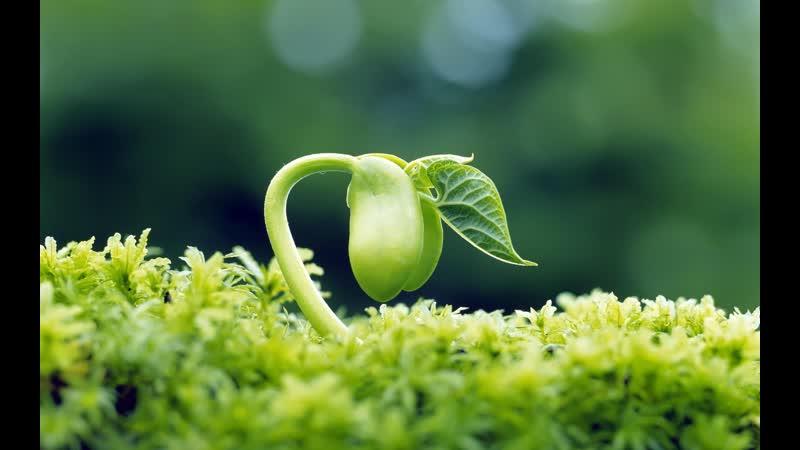 Невидимая жизнь растений 4 серия Борьба за выживание