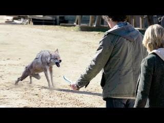 Мужчина пристрелил волчицу и не пожалел ее волчат, спустя 10 лет случилось невероятное!
