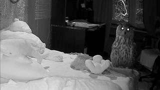 Что будет, если сову оставить одну в комнате на сутки? Тайные делишки совы - часть 1