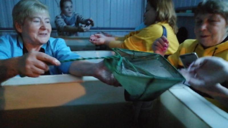 2-х месячные мальки африканского сома. 14.11.20 г.