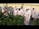 Голландские розы теперь выращивают в Сибири. Какие технологии применяют, чтобы получить оптимальный размер, цвет и аромат