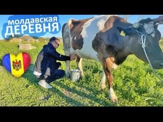 День в молдавском селе - Марамоновка / О тех, кто не уехал из Молдовы