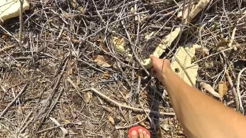 Чистая планета участвует в очистке пляжей