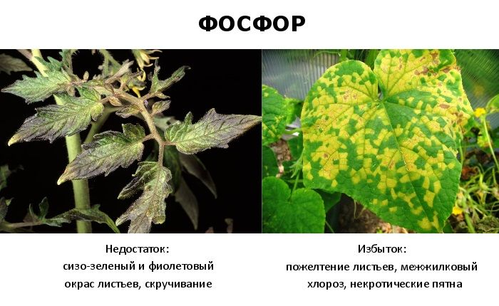 Переизбыток фосфора