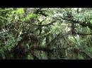 Новозеландский лес как на Пандоре