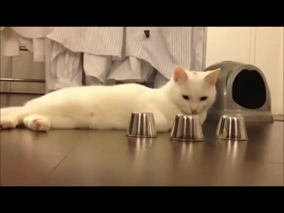 Кручу - верчу, кота запутать хочу! ..