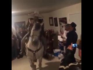 Танцующий конь (6 sec)