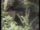 Война в Абхазии . 1992 год. Сюжет от 30.08.92.