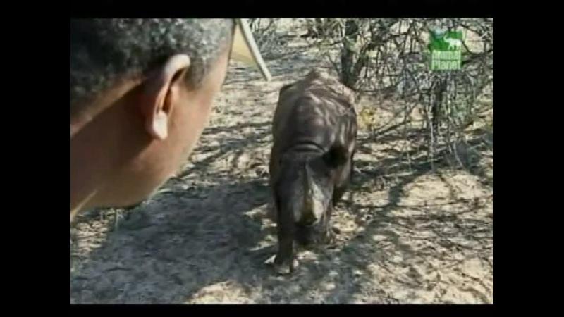 Заповедник в дебрях Африки Animal Park Wild in Africa 2006 BBC episode 10