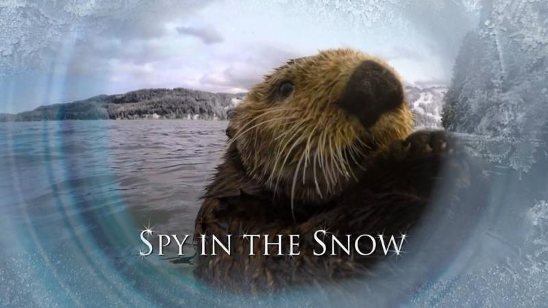 BBC Шпион в Снегах Тайны снежных обитателей 2018 HD 1080
