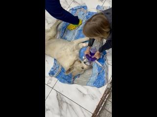 """Видео от Приют для  животных """"БиМ"""", Челябинск"""