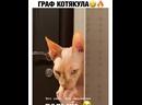 ПОТЕРЯШКИ СЫКТЫВКАР - svk/lost_komi