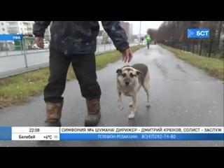 Собачья верность: в Уфе пес 2 года ждет возвращения умершего хозяина