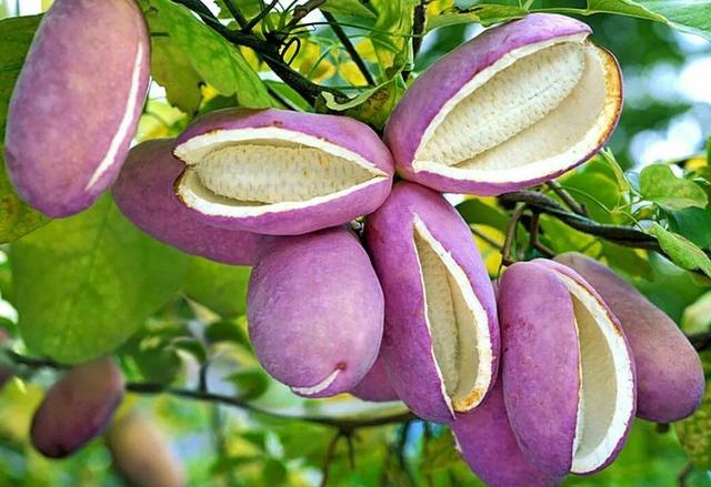 Самые удивительные экзотические фрукты мира