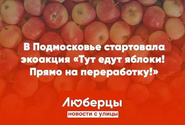 Как утилизируете излишки урожая яблок? Соседям раздаете и...