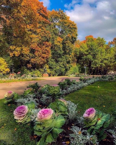 Осень в этом году удалась. В Царском селе зацвела ...