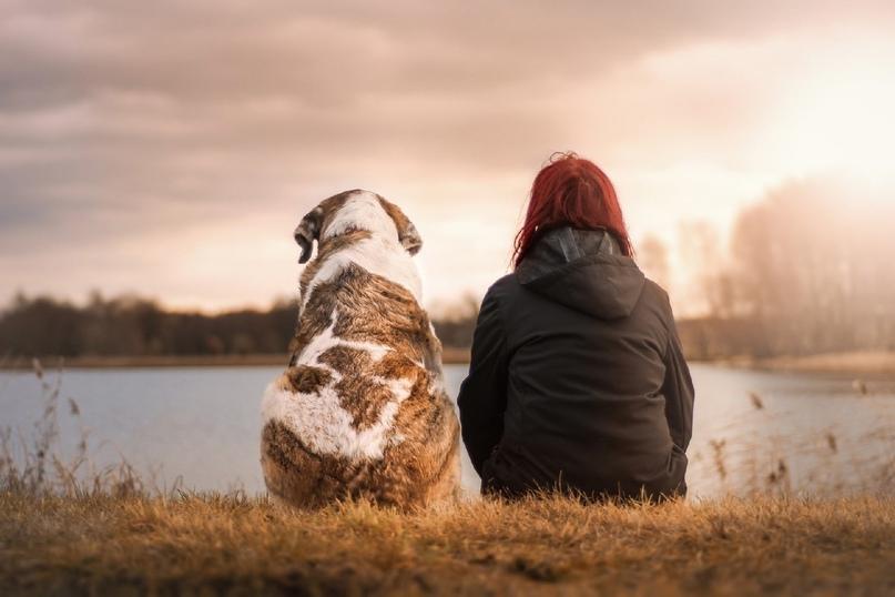 «Лапа дружбы»: Открытые НКО объявляют конкурс проектов по спасению животных, изображение №1