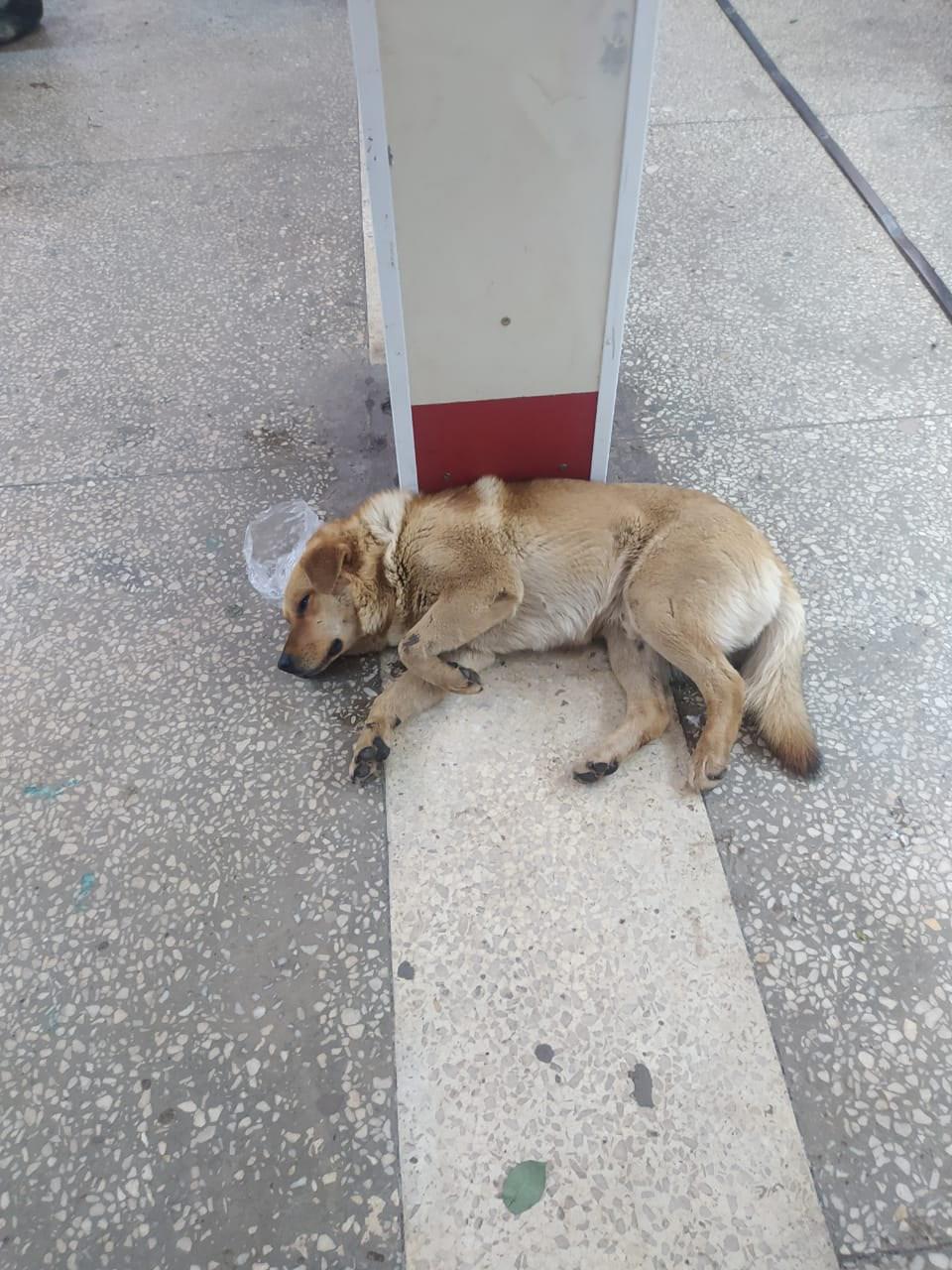 Срочно нужна помощь собаке. Остановка театр кукол,