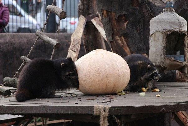 Калининградский зоопарк с 20 октября по 7 ноября о...