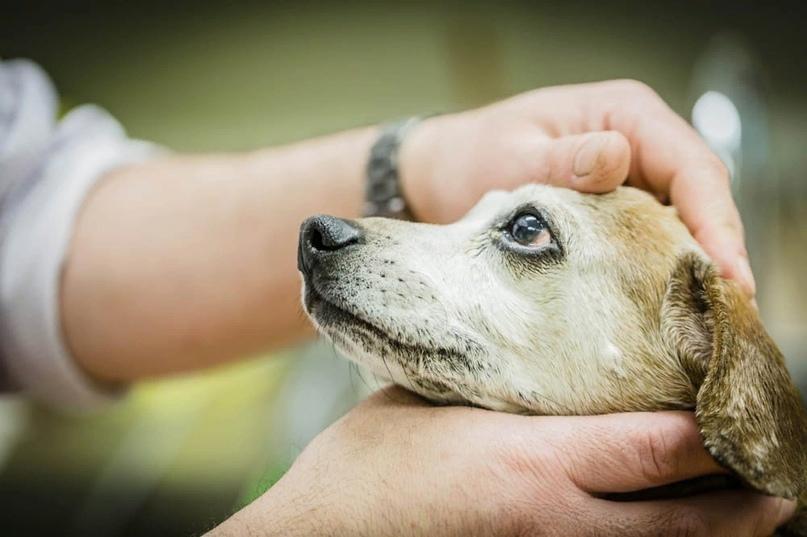 Защита домашних животных.