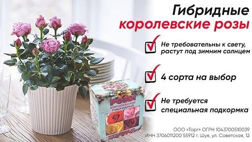 Кейс: «Королевские гибридные розы» в MyTarget!, изображение №9