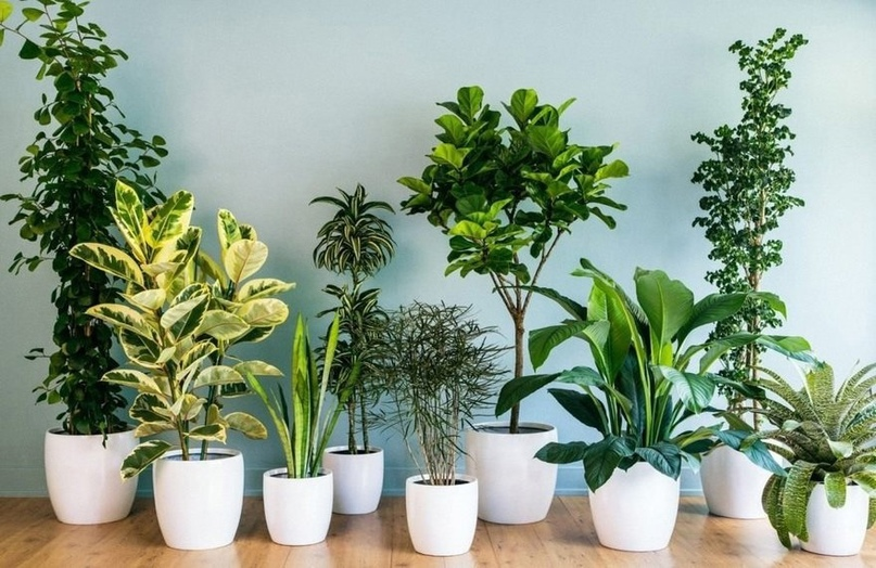 Магазин «Спасибо!» объявил о запуске регулярным обменом растениями