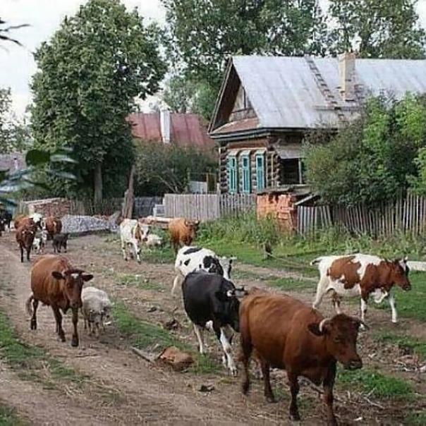 В Кузбассе будут законодательно решать проблему с ...