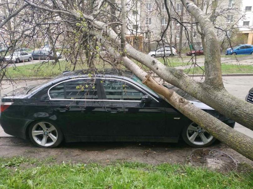 В Минске за сутки зафиксировано 10 случаев падения деревьев