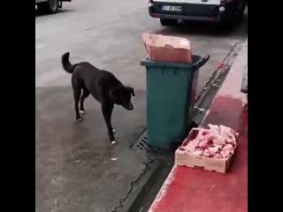Благодарность добрым людям - кормят бездомных собак -