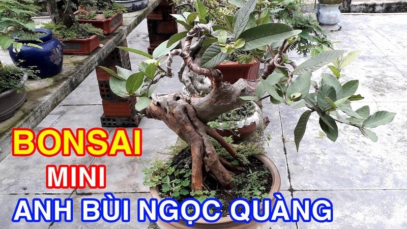 DND Thăm vườn Bonsai mini của anh Bùi Ngọc Quàng