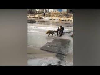 Парень рискнул и спас собаку из-подо льда