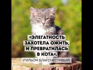 Почему невозможно не любить котов Adme собрали железные аргументы