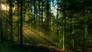 Звуки природы, шум леса, пение птиц sounds of nature, birdsong, forest noise