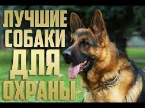 лучшие собаки для охраны best breed of dog