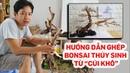 Hướng dẫn ghép lũa bonsai thủy sinh đẹp từ củi khô - Quoidecor