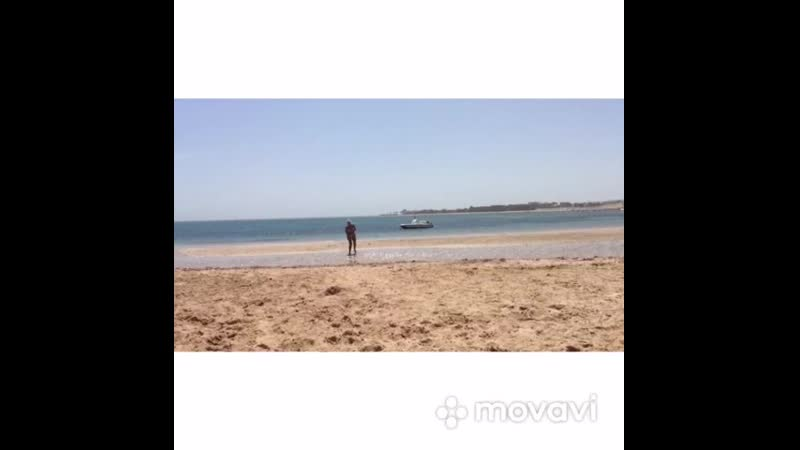 Море солнце я и собака.