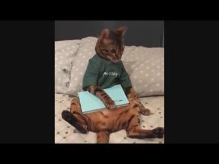 Смешная подборка с котами и кошками. Самые смешные видео. Приколы про животных