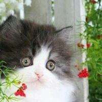 Фотография страницы Елены Скальской ВКонтакте