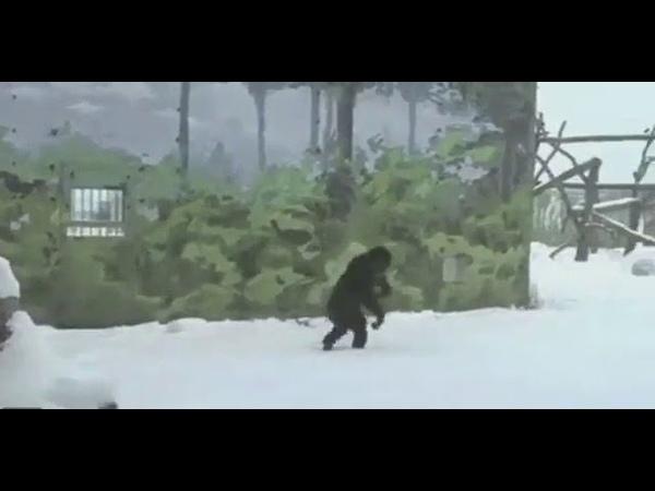Планета обезьян Ну нахер