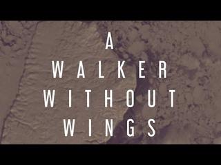 Transatlantic Alliance - A Walker Without Wings