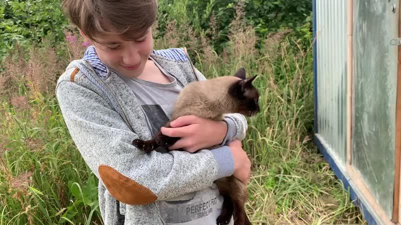 Сиамская кошка Сима (ищет дом)