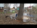 Валка больших деревьев, подборка. Часть 2. Big tree felling compilation Russia. Part 2.