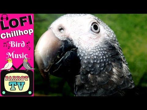 Lofi Chillhop Music for Birds Relaxing Music for Parrots Parrot TV